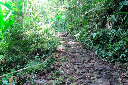 chemin de l'or dans la Serra da Bocaina