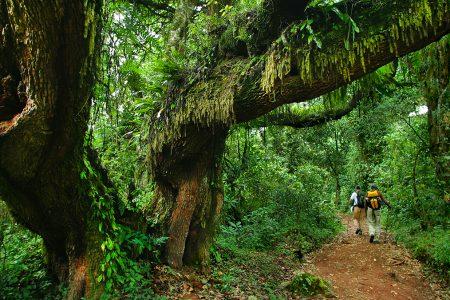 randonnée en jungle, Equateur