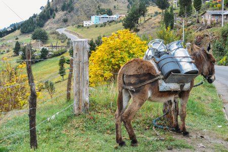 dans les Andes d'Equateur