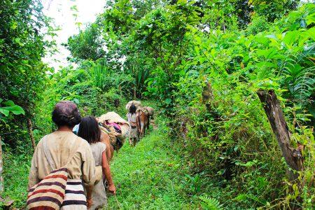 en route vers le campement kogi