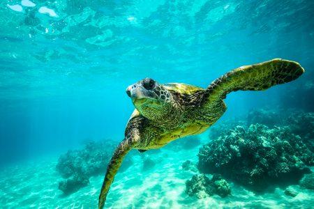 tortue marine sur la Costa Verde