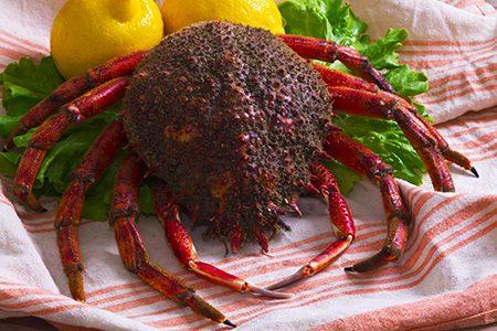 la centolla, ou araignée de mer