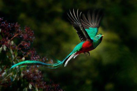 La légende du quetzal