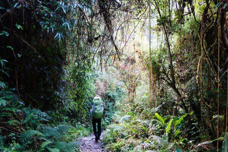 randonnée Yungas, le trek du Choro